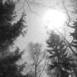 KRAUSE, Manuela/POLE - Mein Freund Der Baum (Front Cover)