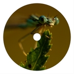 HERRB - Dragonfly On Dope (remixes) (Front Cover)