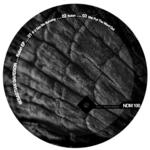 DAVIDSON, Sebastian - Kolari EP (Front Cover)