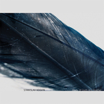 VDOVIN, Stanislav - Made Of Cloth & Feather (Front Cover)