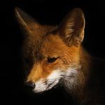 Foxology EP