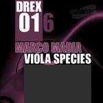 Viola Species