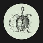 Hot Sea's Baby Turtle EP
