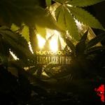 Legalize It EP