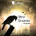 Bird Dreams