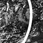 SPEED PAINTERS - Bellarine II (Front Cover)