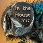 In The House 2017