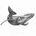 Whale 52