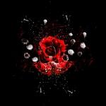 Crymson Rose