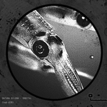DATURA DILEMA - Orbital (Front Cover)