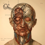 RE_P - Brain Intuitions (Front Cover)