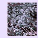 Digital Soup (Para-Mu Edits) + Bonus