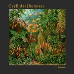 Gryllidae (Remixes)