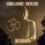 Organic House - Buddha