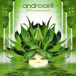 ANDROCELL - Efflorescence
