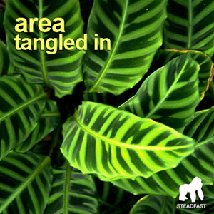 AREA - Tangled In