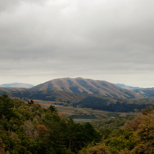 DIRTY PROJECTORS/BJORK - Mount Wittenberg Orca