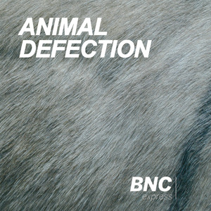 ANIMAL DEFECTION - Donkey