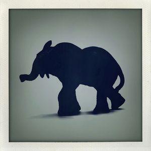 ODDVAR/KAI KURVE - Elephant