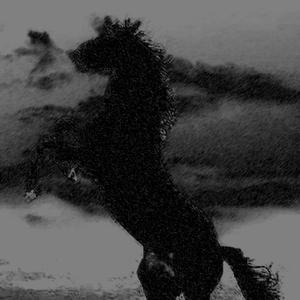 ROBERT S PT - The Dark Horse
