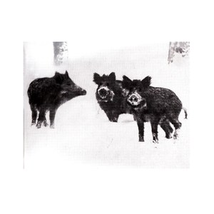 BURIAL - Naked Pigs/Warfare Orgasm