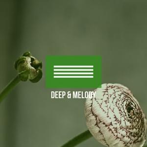 VARIOUS - Deep & Melody 2