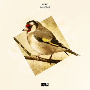 CHIME - Goldfinch