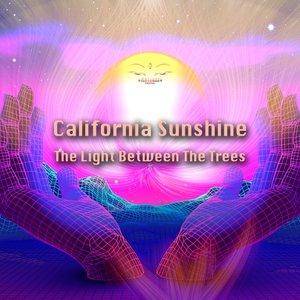 CALIFORNIA SUNSHINE - The Light Between The Trees