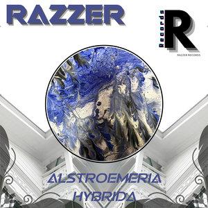 RAZZER - Alstroemeria Hybrida