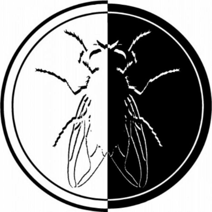 LAGUNA SECA - The Flow