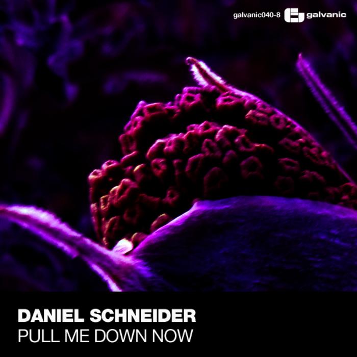 SCHNEIDER, Daniel - Pull Me Down Now