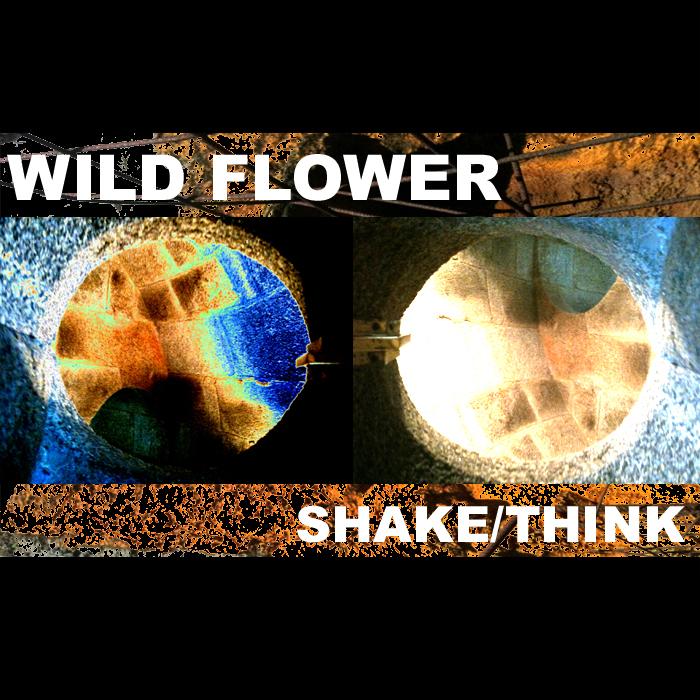 WILDFLOWER - Shake
