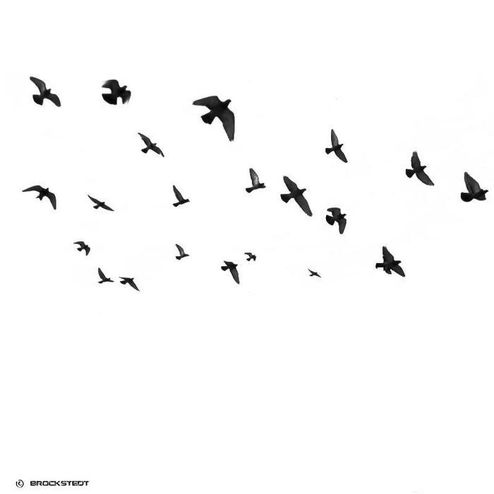 VARIOUS - We Love Birds Part 2