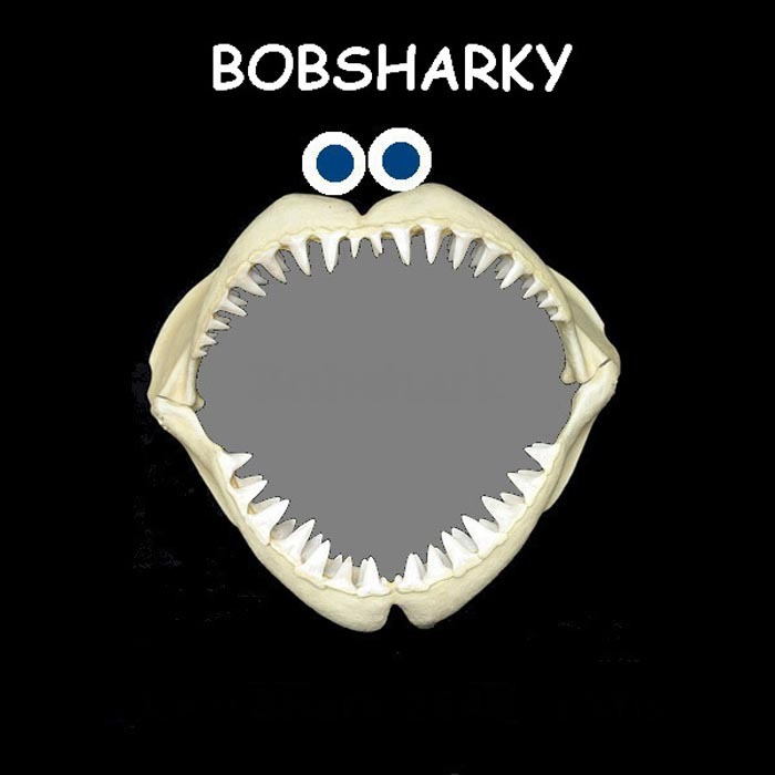 BOBSHARKY - August Afternoon