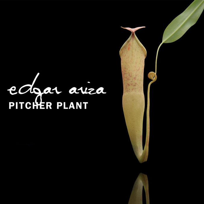 ARIZA, Edgar - Pitcher Plant