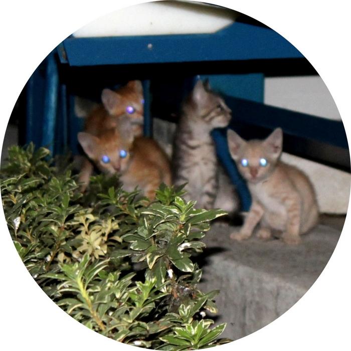 DEUTSCHMANN, Oliver - The Cat Crew Cutz