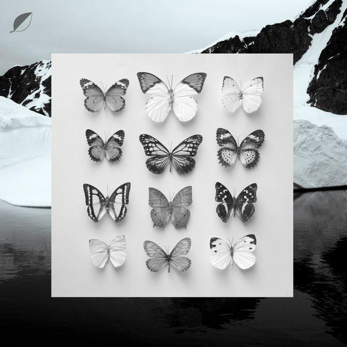 CHRISTIAN LOFFLER - Young Alaska