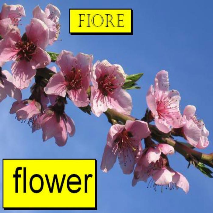 FIORE - Flower (remixes)