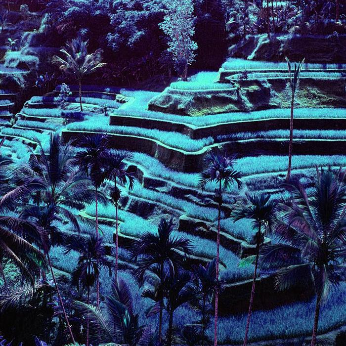 DUST - Paradise Simulator