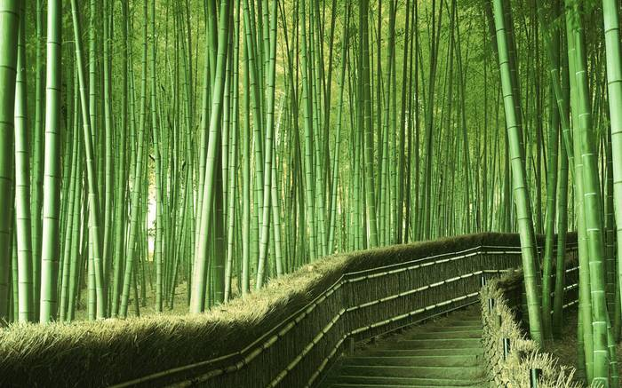 KI YOTA - Through The Bamboos
