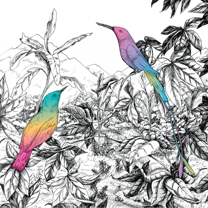 A VISION OF PANORAMA - Two Birds