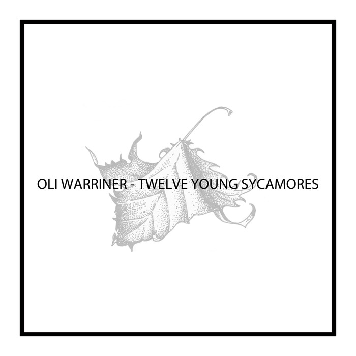 OLI WARRINER - Twelve Young Sycamores