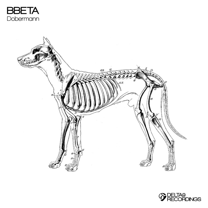 BBETA/JULIAN - Dobermann