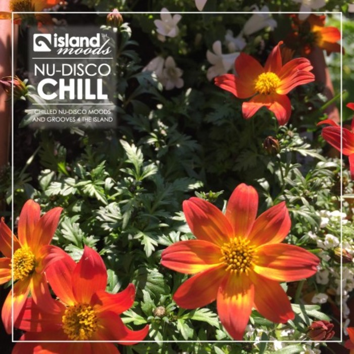 VARIOUS - Island Moods Nu-Disco Chill