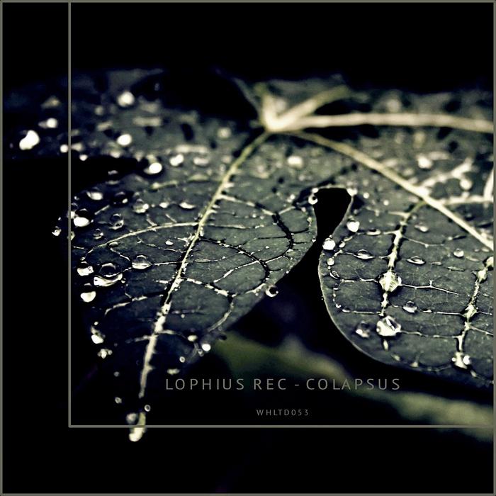 LOPHIUS REC - Colapsus