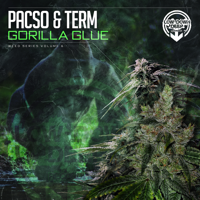 PACSO & TERM - Gorilla Glue