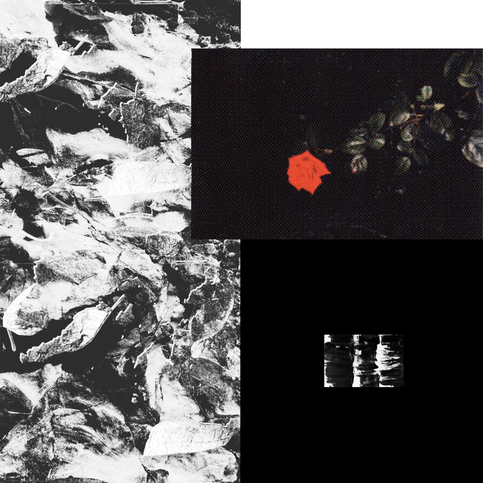RIBE/OISEL/REFRACTED/RUPTUR3 - Prime EP