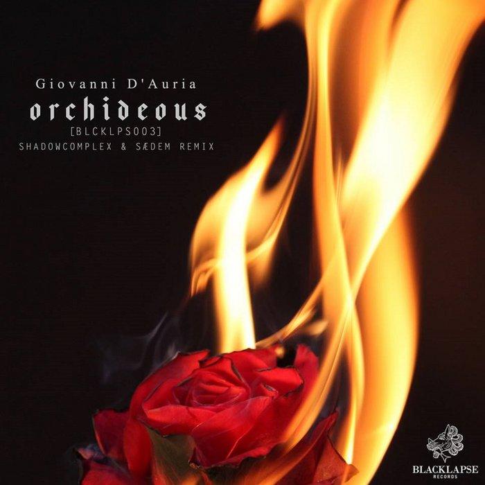GIOVANNI D'AURIA - Orchideous