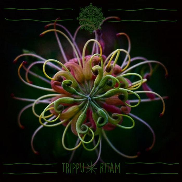 TRIPPU - Ritam