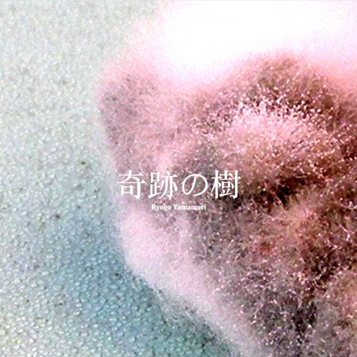 RYOGO YAMAMORI - Moringa - The Miracle Plant